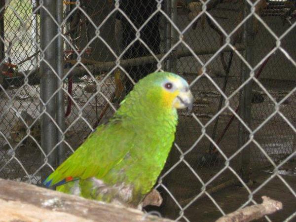 Parrot Refuge 2