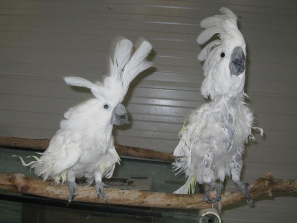 Parrot Refuge 3