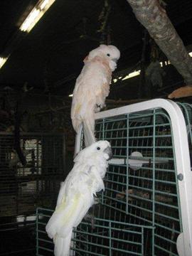 Parrot Refuge 5