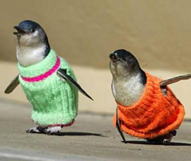 Knitting Sweaters For Oil Slicked Penguins Not Good For The Birds